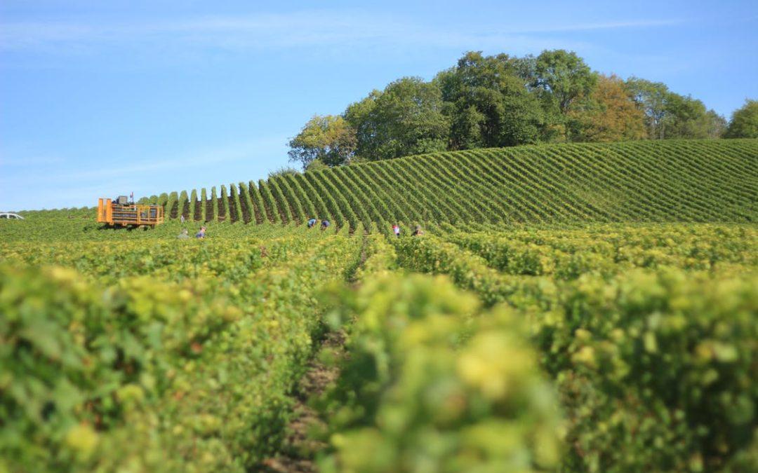 Viticoltura, vendemmia e vinificazione nel tempo