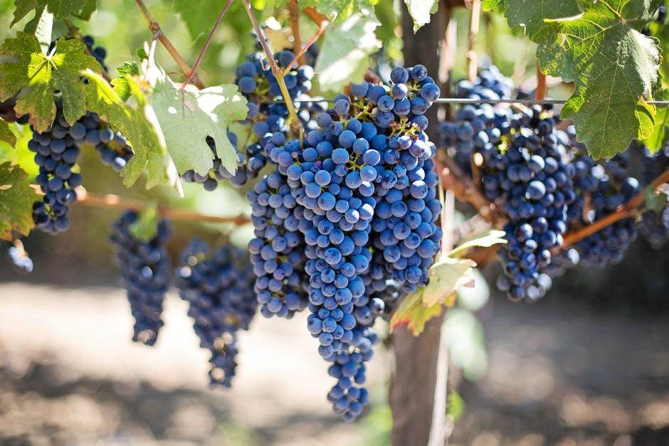Inizia la vendita di vino sfuso per damigiana!